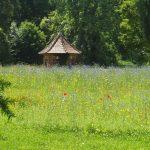 Fleurs de printemps sur les pelouses du Domaine de Saint-Paul
