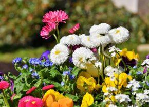 Les fleurs prolifèrent au Domaine